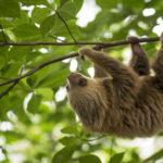 Projection : Costa Rica, la fièvre verte